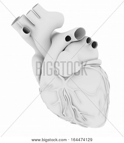 White Human Heart Isolated On White Background