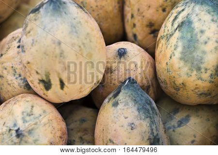 The papaya, papaw, or pawpaw is the plant Carica papaya, one of the 22 accepted species in the genus Carica of the family Caricaceae.