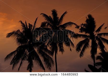 Silhouette of plam trees with colourful sunset and twilight sky background.