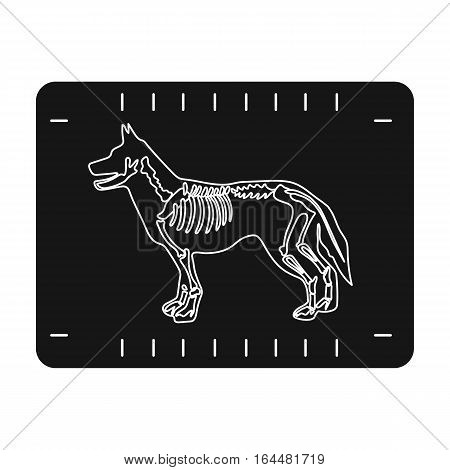 Dog x-ray icon in black design isolated on white background. Veterinary clinic symbol stock vector illustration.
