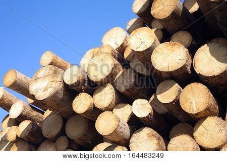 Top of pile of pine logs stacked against a blue cloudless sky. Photo closeup