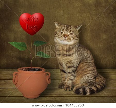 The cute cat grows flower. He is a real agronomist. The flower looks like a big red heart marked