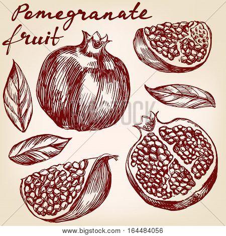 pomegranate fruit set hand drawn vector illustration realistic sketch