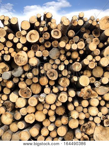 Many sawed pine logs stacked in a pile under cloudy sky. Front view vertical closeup