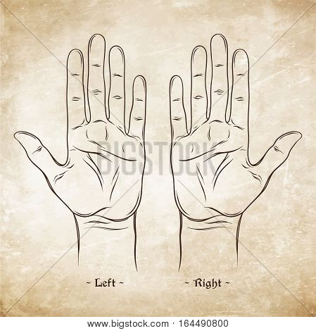 Palmistry Or Chiromancy Chart Blank Template. Vector Illustration