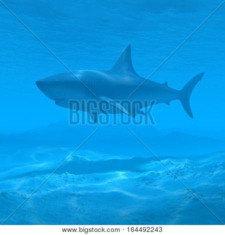 silhouette shark underwater with caustic 3d rendering
