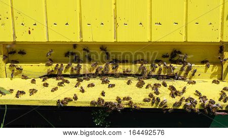 A lot of bees in yellow beehive