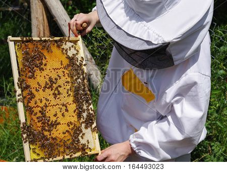Beekeeper in white worksuite with bees in beehive