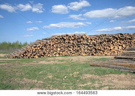 Rustic landscape with many stacked sawed pine logs in piles under beautiful blue sky width white clouds