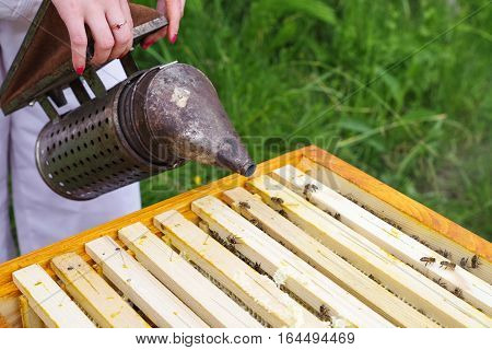 Apiculture - beekeeper smoking a lot of bees