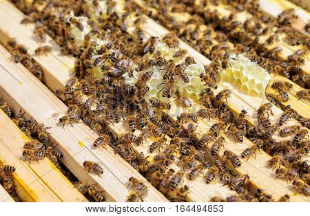 Bees in beehive - close up view