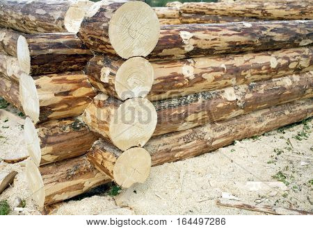 Process of rural house construction from heavy logs closeup