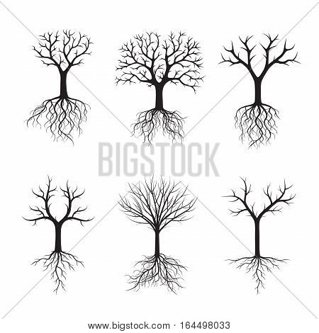 Set Black Trees with Roots. Vector Illustration and graphic element.