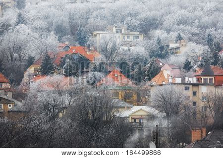 Witer at the suburbs with snowy trees
