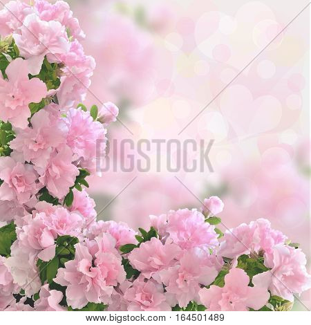 Pink azalea flowers romantic background with bokeh light. Valentine or wedding card love concept for celebration.