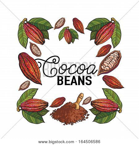Square frame of cacao fruit, beans and powder with place for text, sketch illustration isolated on white background. Cacao fruit, beans, powder forming square frame for chocolate banner, poster design