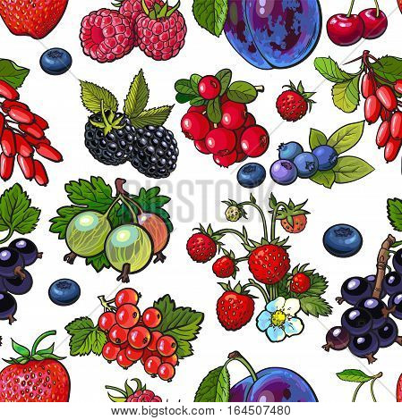 Berries - blueberry, raspberry, gooseberry, current, plum, sketch seamless pattern illustration on white background. Garden, forest berries seamless patern, backdrop, textile, wraping paper design