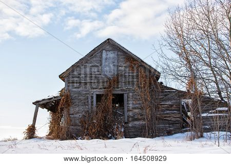 Front view of an old crumbling abandoned two story farmhouse with covered porch and dead vines in a winter landscape