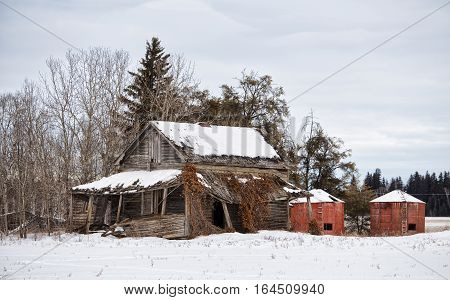 A collapsing old house with covered porch and two red wooden granaries in an abandoned farm yard in countryside winter landscape