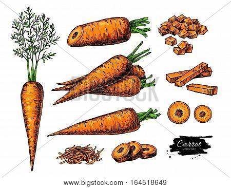 Carrot hand drawn vector illustration set. Isolated Vegetable artistic style object with sliced pieces. Detailed vegetarian food drawing. Farm market product. Great for menu, label, icon