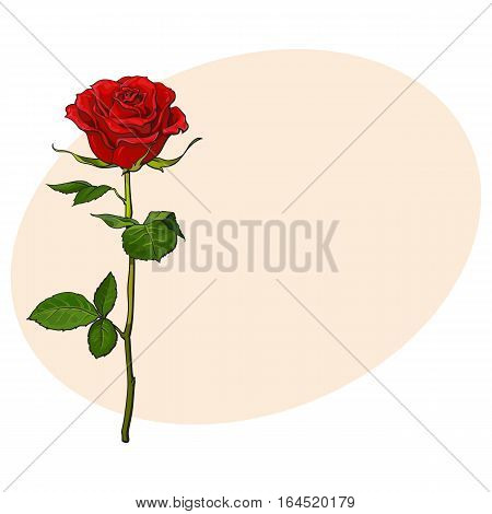 Deep red, ruby rose flower with green leaves, sketch style vector illustration isolated on background with place for text. Realistic hand drawing of open red rose, symbol of love, decoration element
