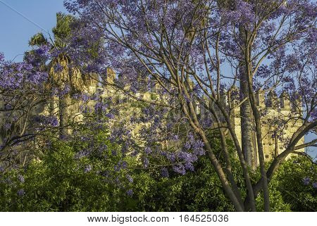 blooming jacaranda in the background of the old castle