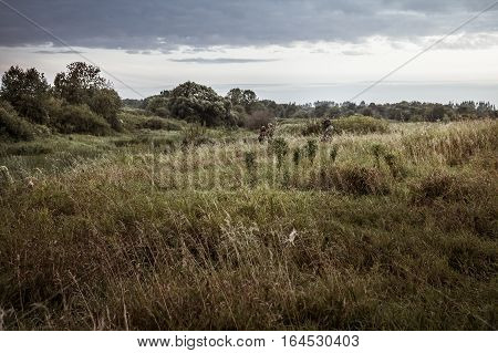 Rural landscape during hunting season with hunters in tall grass in rural field with dramatic sky during dusk