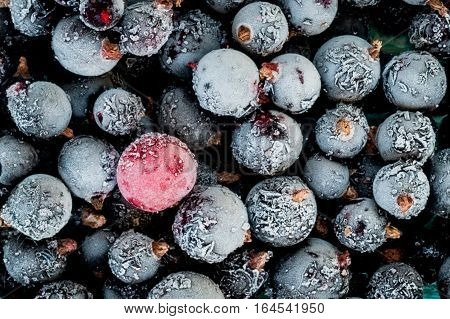 frozen black currant berries and red currant berry top view