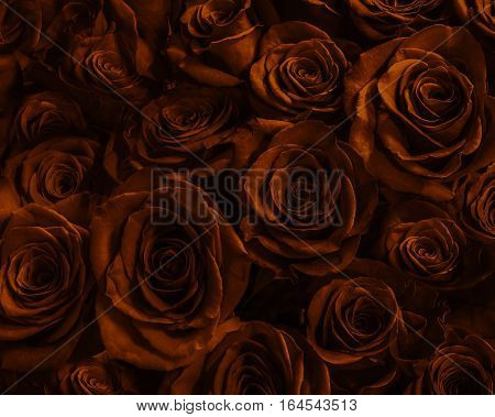 Natura roses background. greeting card with a luxury roses