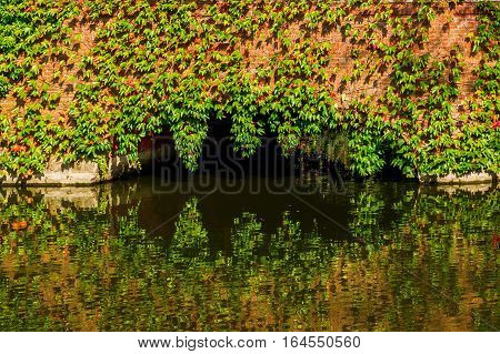 picture of a vine clad bridge over a pond