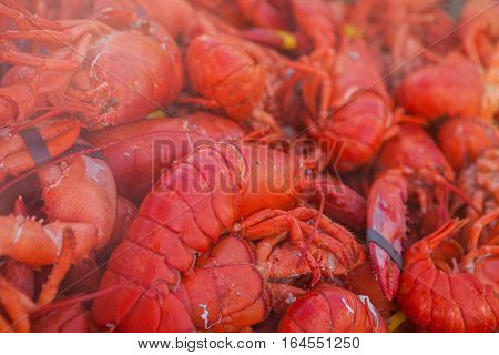 Lots of freshly boiled lobsters. Food lobster festival. Street food lobster festival. Sea food
