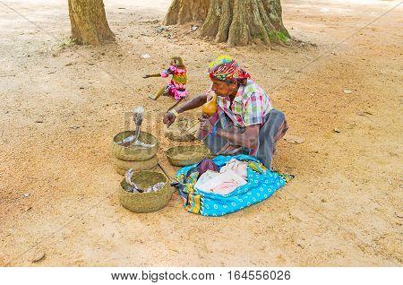 ANURADHAPURA SRI LANKA - NOVEMBER 26 2016: The snake charmer plays pungi hypnotizing the cobras in baskets in Mahamevnawa Park on November 26 in Anuradhapura.