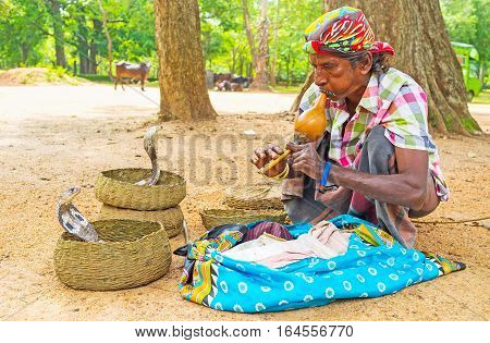 ANURADHAPURA SRI LANKA - NOVEMBER 26 2016: The snake charmer mesmerizes the cobras with sounds of pungi traditional aerophonic instrument on November 26 in Anuradhapura.