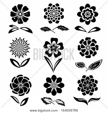Dahlia, aster, daisy, chamomile, gowan, anemone, orchid flower set. Spring and summer flowers. Floral black symbols with leaves. May be used in cuisine. Vector isolated.