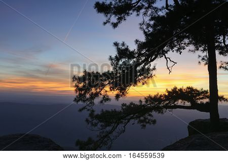 The silhouette scene of pine tree at the Lonsak cliff in the Phukradung nation park after the sunset with the twilight scene