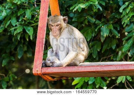 monkey sitting on swing in the park