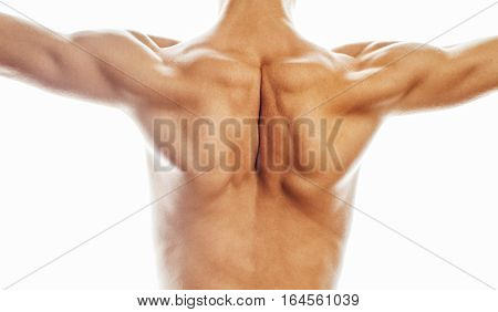mens back close up isolated on white background, many muscle demonstration, healthy real body concept