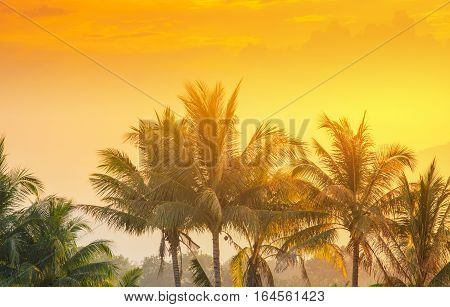 coconut palm tree and light shines sunset