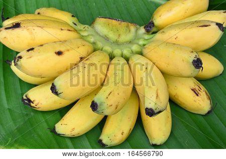 Bunch of bananas on fresh banana leaf background