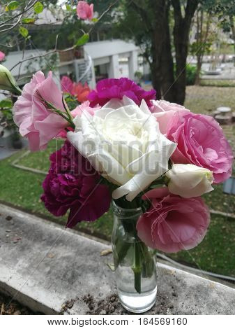 pink and white rose in the glass of vase