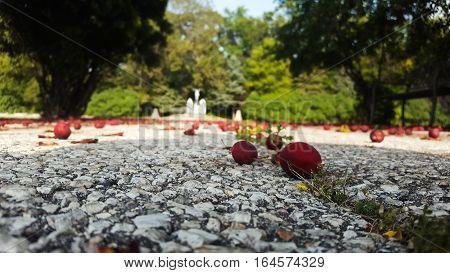Long angled shot of fallen berries in gravel ground