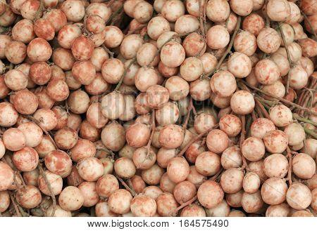 Baccaurea ramiflora Lour or Burmese Grape Sweet and Sour Asia Local Fruit.