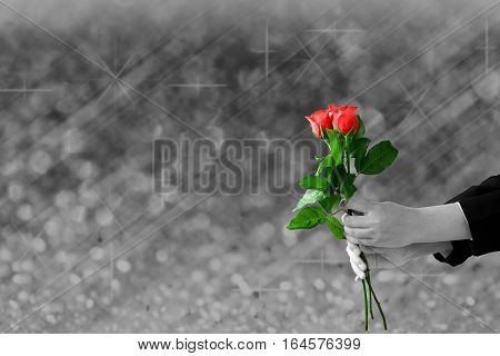 woman hands holding red rose flower on gray lights festive blurry and bokeh twinkled bright background.