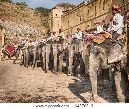 AMER. INDIA - NOVEMBER 18. 2016: A row of elephants with their riders or mahouts waits for tourists to make the clilmb up to the Amber Fort in the city of Amer near Jaipur. India.