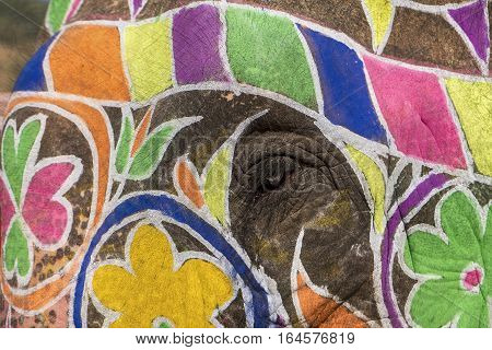 A close-up view of the eye of an elephant decorated with colorful paint at the Amber Fort near Jaipur India.