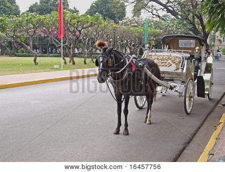 Hispanic Carriage