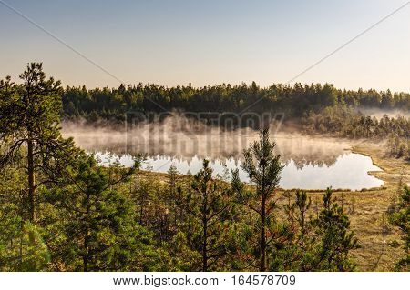 Morning mist over lake and swamp in the forest