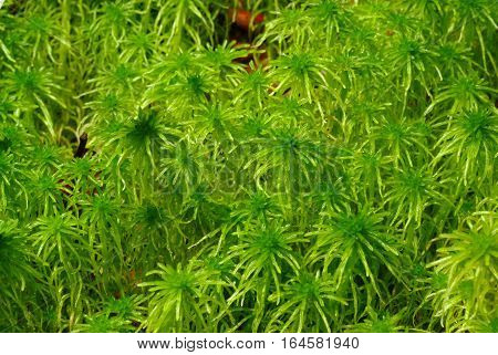 green moss in forest.Natural background with forest green moss
