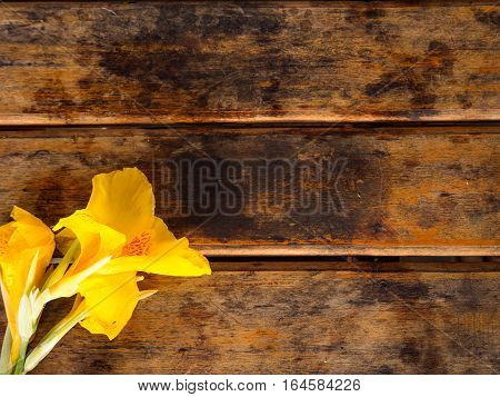 Yellow Canna flower on wooden table background