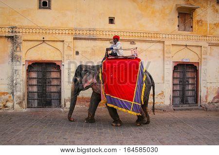 Amber, India - November 13: Unidentified Man Rides Decorated Elephant Near Amber Fort On November 13